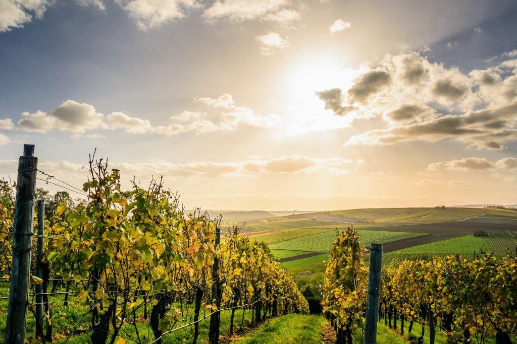VÍNO MAPA – Magazín nejen o samotném víně, ale i vinařské kultuře